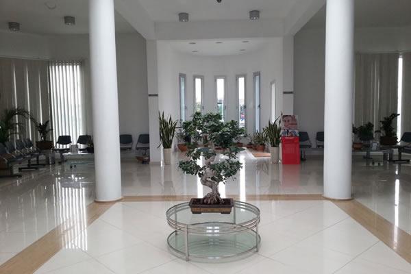 Toumazi Physio Gallery - Toumazis reception tree